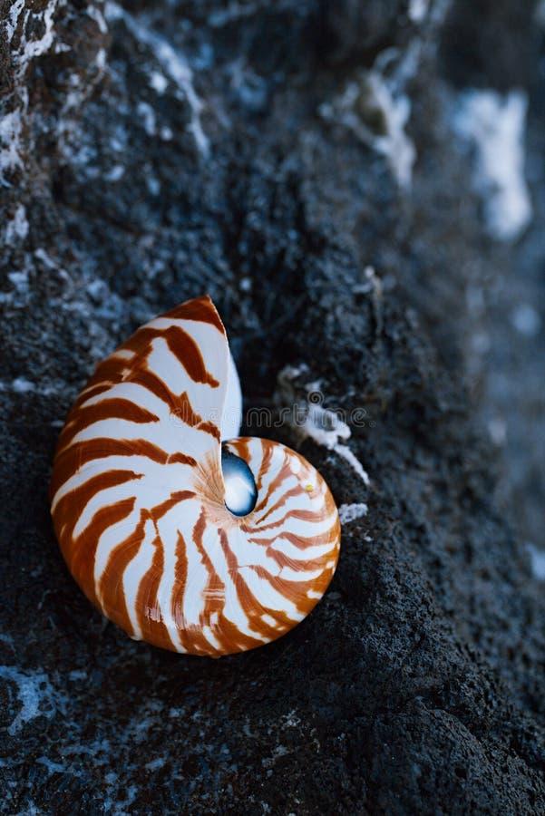 Nautilus della conchiglia sulla spiaggia del mare con le onde nell'ambito della luce del sole di alba immagine stock
