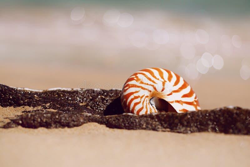 Nautilus della conchiglia sulla spiaggia del mare con le onde nell'ambito della luce del sole immagini stock