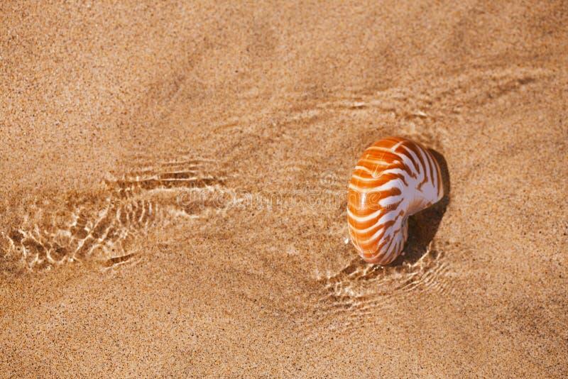 Nautilus della conchiglia sulla spiaggia del mare con le onde nell'ambito della luce del sole fotografie stock