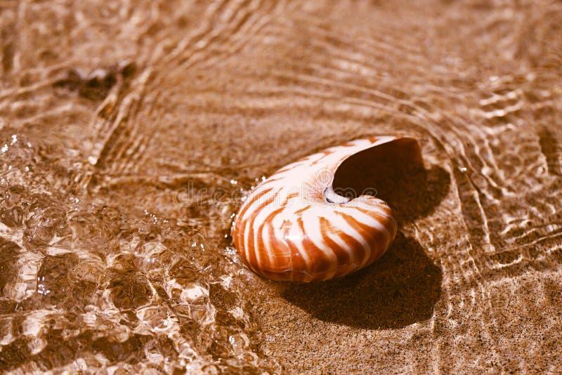 Nautilus della conchiglia sulla spiaggia del mare con le onde nell'ambito della luce del sole fotografia stock libera da diritti