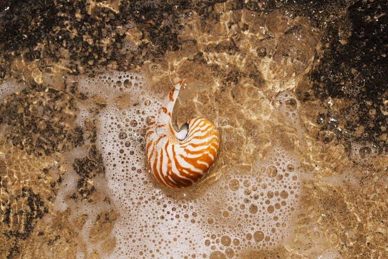 Nautilus della conchiglia sulla spiaggia del mare con le onde nell'ambito della luce del sole immagine stock libera da diritti