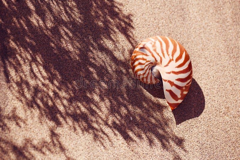 Nautilus della conchiglia sulla spiaggia del mare con le onde nell'ambito della luce del sole fotografia stock