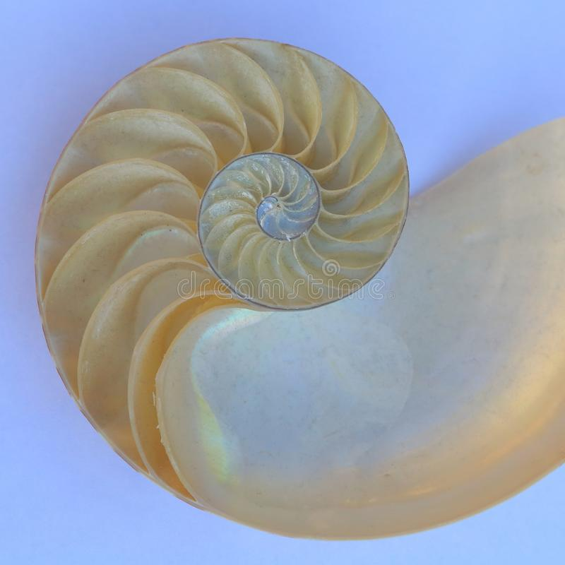 Nautilus half-shell spiral pattern stock photography