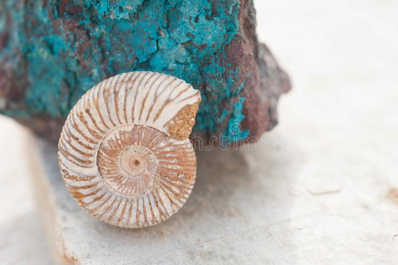 Nautilus-Muschel-Fossil und Chrysocolla-Stein lizenzfreie stockfotografie