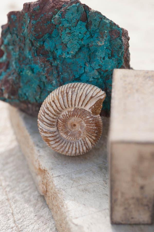 Nautilus-Muschel-Fossil und Steinhintergrund Chrysocolla stockfotos