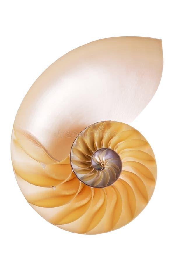 Nautilus-Schalenhälfte stockbild