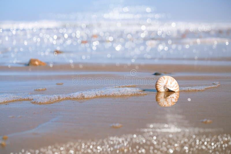 Nautilus sea shell on Atlantic ocean Legzira beach, morocco. Nautilus sea shell with seafoam on Atlantic ocean Legzira beach, morocco royalty free stock photography
