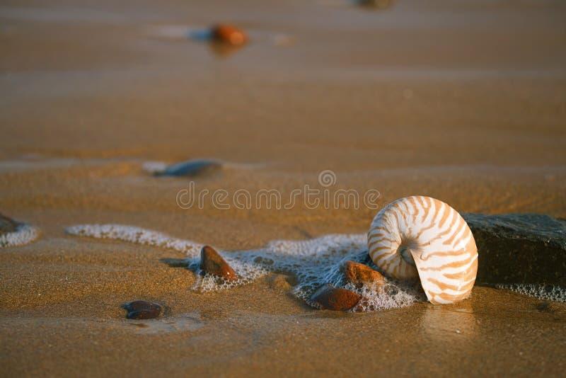 Nautilus sea shell on Atlantic ocean Legzira beach. Nautilus sea shell with seafoam on Atlantic ocean Legzira beach, morocco royalty free stock photo