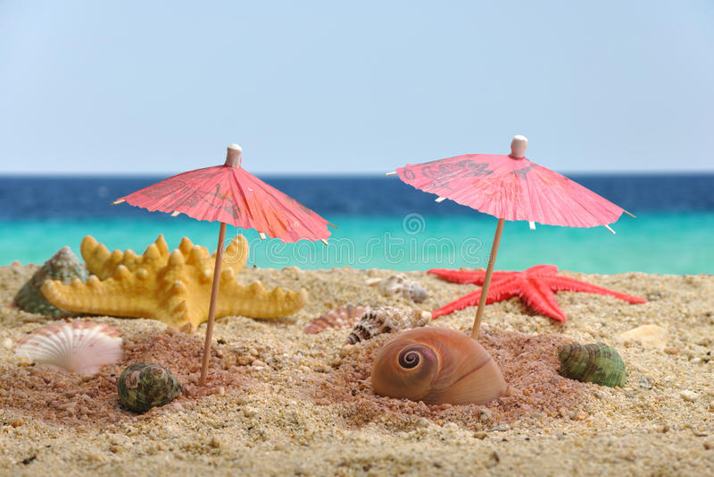 Nautilus sea shell catching shadow