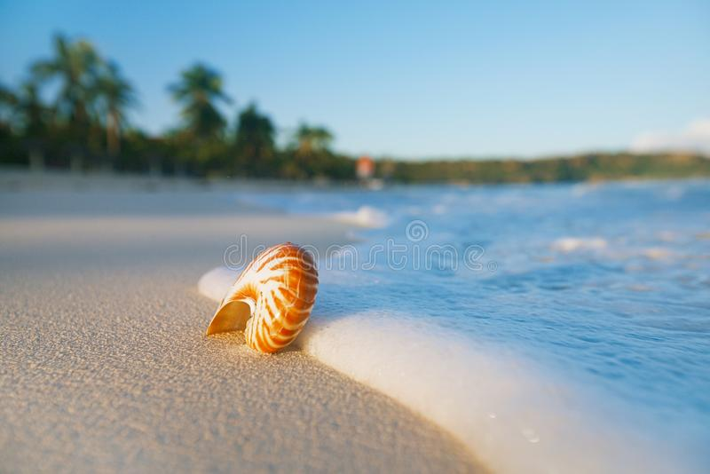 Nautilus sea shell on perfect sand beach. With waves and seascape in the sun, shallow dof stock photo