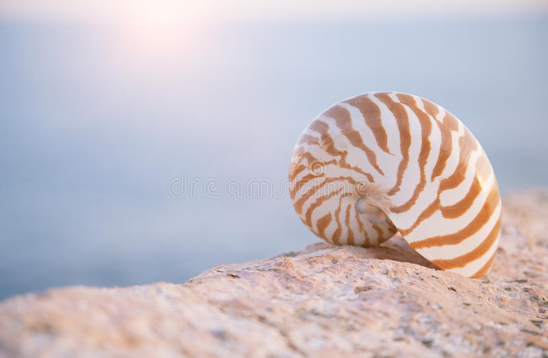 Download Nautilus Seashell Sand On Sunrise And Ocean Stock Photo - Image of seascape, spain: 25354698