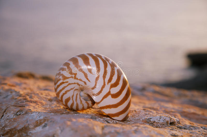 Download Nautilus Seashell Sand On Sunrise And Ocean Royalty Free Stock Images - Image: 32450369