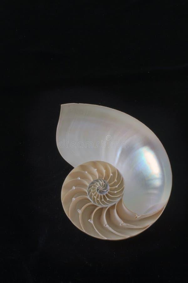 Nautilus-Shell lizenzfreie stockfotos
