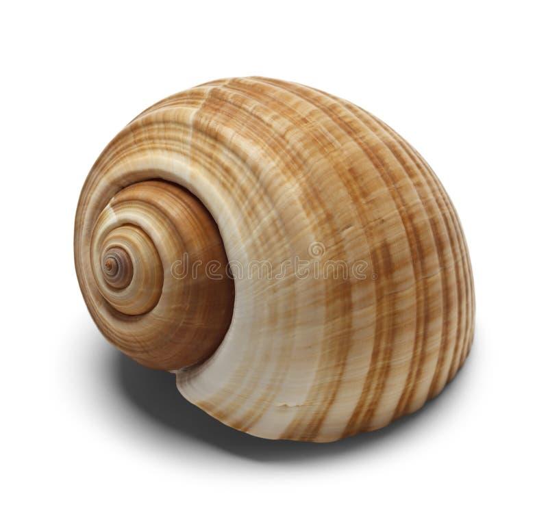 Nautilus Shell immagini stock libere da diritti