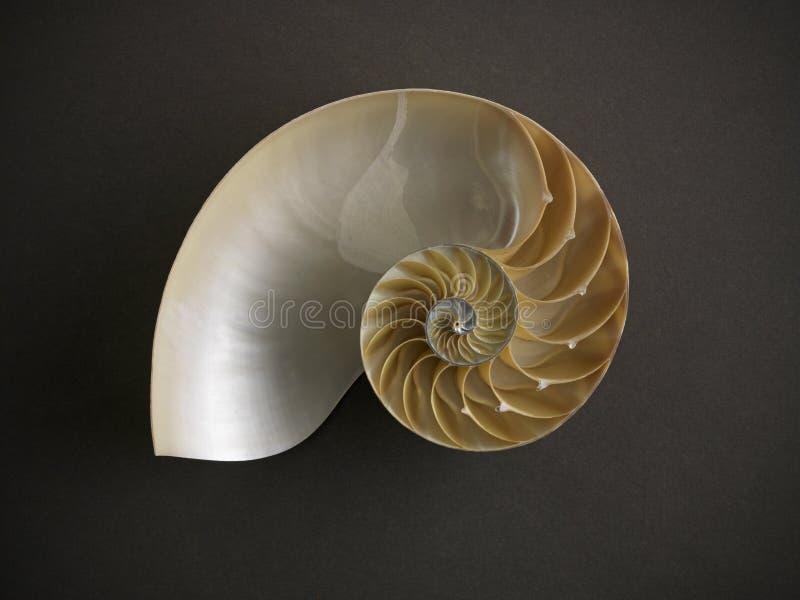 Nautilus Shell photographie stock libre de droits