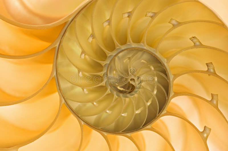 Nautilus Shell. Close-up of a backlit back nautilus shell revealing its spiral pattern and intricate details royalty free stock photo