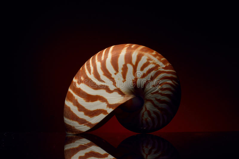 Nautilus Shell imagem de stock royalty free