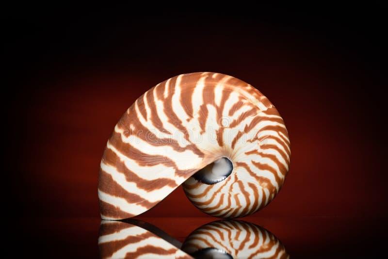 Nautilus Shell fotografering för bildbyråer