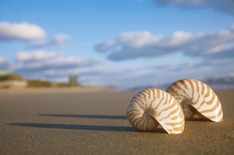 Download Nautilus Shell On Beach  And Blue Sea Stock Image - Image of holiday, idyllic: 33422657