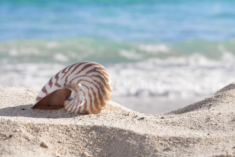 Nautilus Shell On A Beach Sand, Against Sea Royalty Free Stock Photography