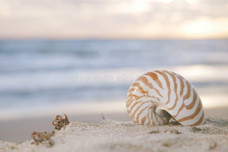 Nautilus Shell On Beach, Sunrise And  Tropical Sea Stock Photo