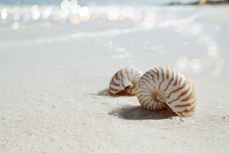 Download Nautilus Shell  In Blue Sea Wave, Shallow Dof Stock Photo - Image: 32348906