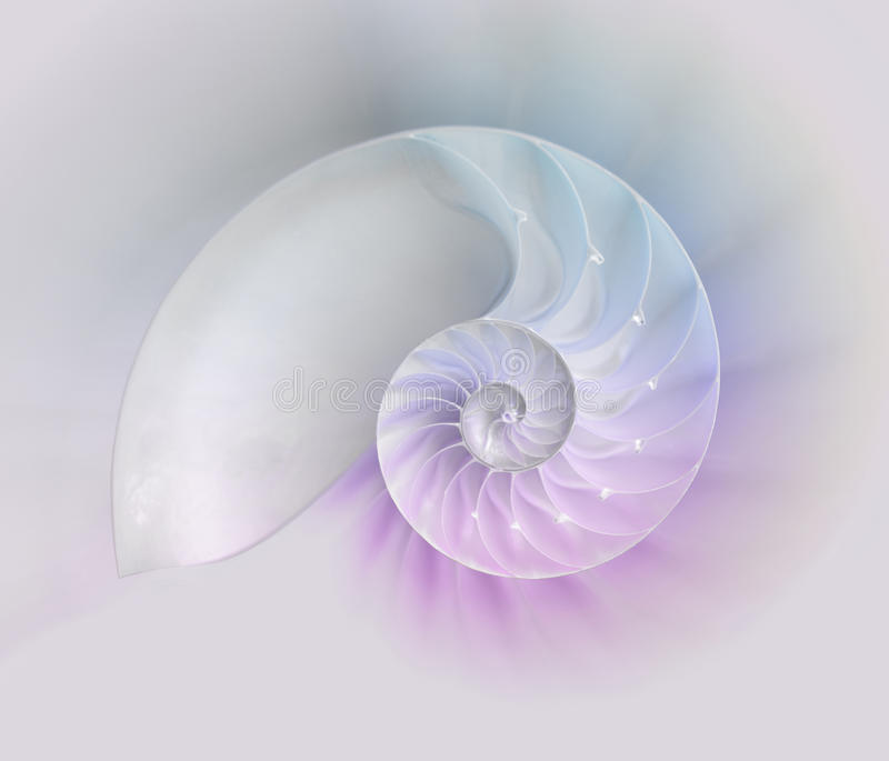 Nautilus shell cut. Chambered Nautilus cutaway Shells on colorful background stock images