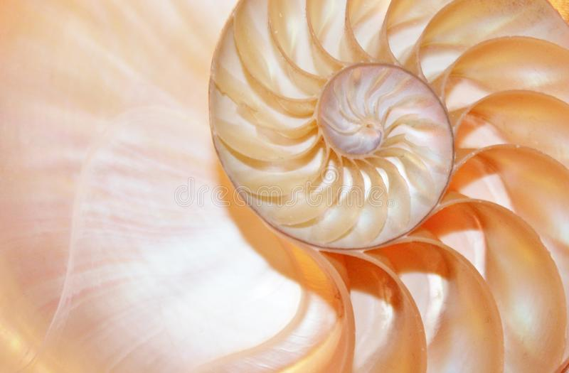 Nautilus shell Fibonacci symmetry cross section spiral structure growth golden ratio, stock, photo, photograph, image, picture. Nautilus shell Fibonacci symmetry royalty free stock images