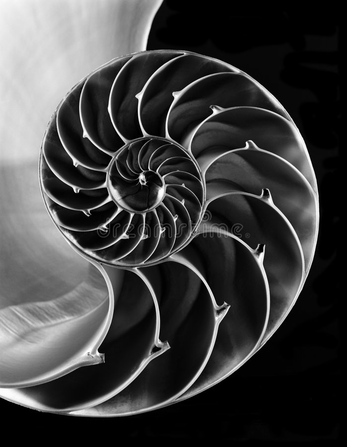 Nautilus shell interior. Inside view of spiral pattern of a cut in half nautilus shell on black background