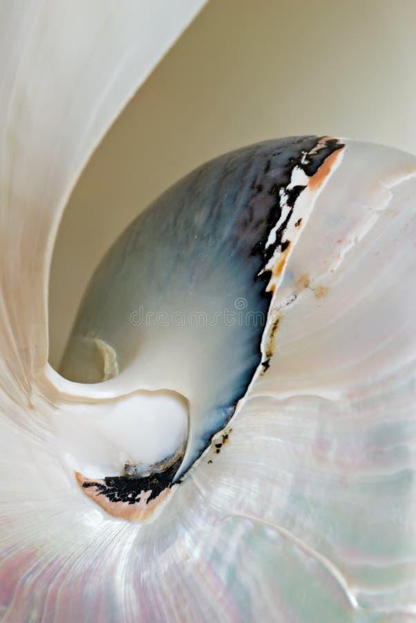 Nautilus Shell Macro. Macro of Nautilus shell detailed markings royalty free stock photo
