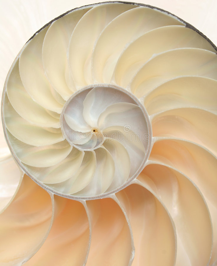 Nautilus shell macro close-up royalty free stock image