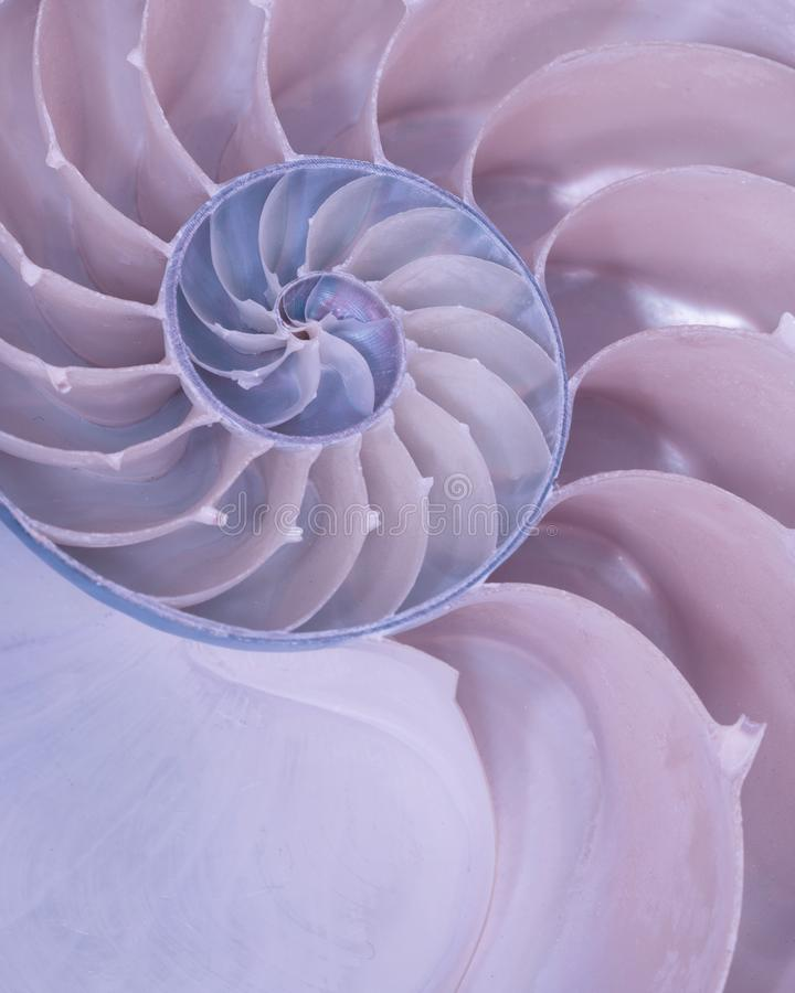 Cross section of a Nautilus shell in pastel colors stock images