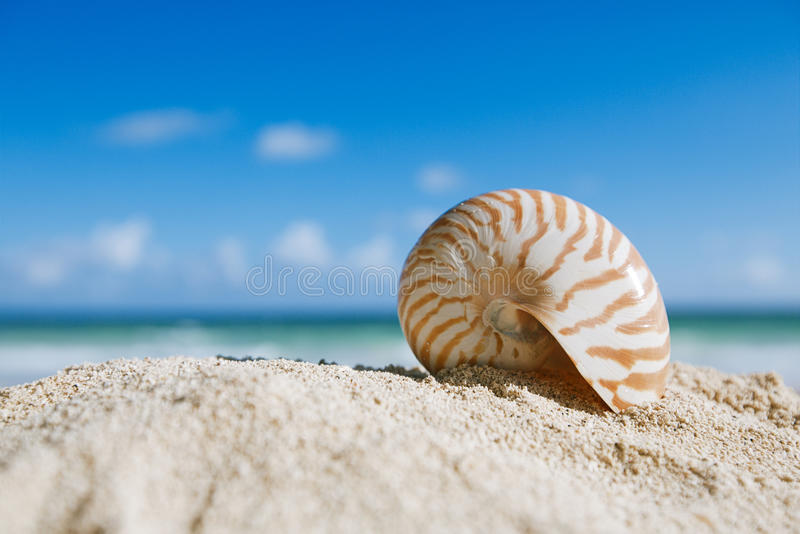 Download Nautilus Shell  With Ocean , Beach And Seascape, Shallow Dof Stock Photo - Image: 32348860