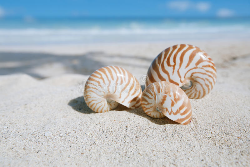 Download Nautilus Shell  With Ocean , Beach And Seascape Stock Photo - Image of florida, object: 32348880