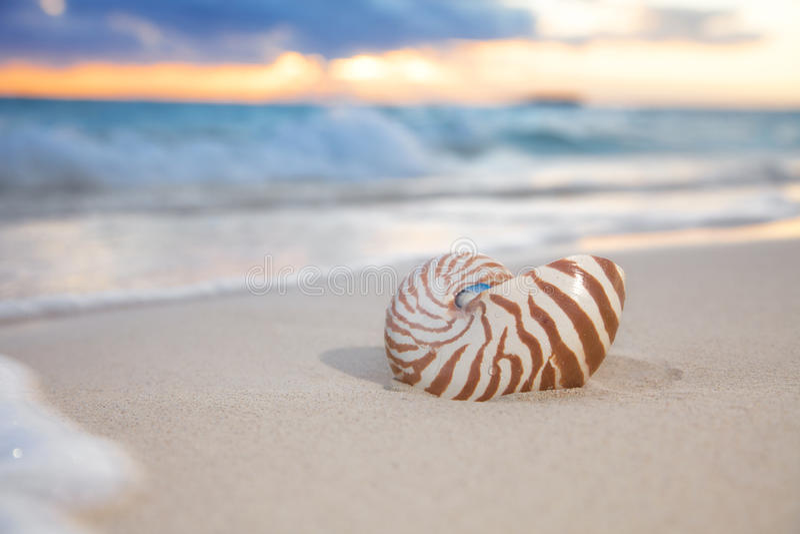 Nautilus shell on sea beach , sunrise. shallow dof