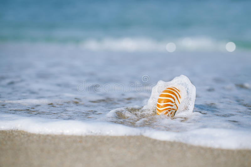 Download Nautilus Shell With Sea Wave,  Florida Beach  Under The Sun Ligh Stock Image - Image: 40650353