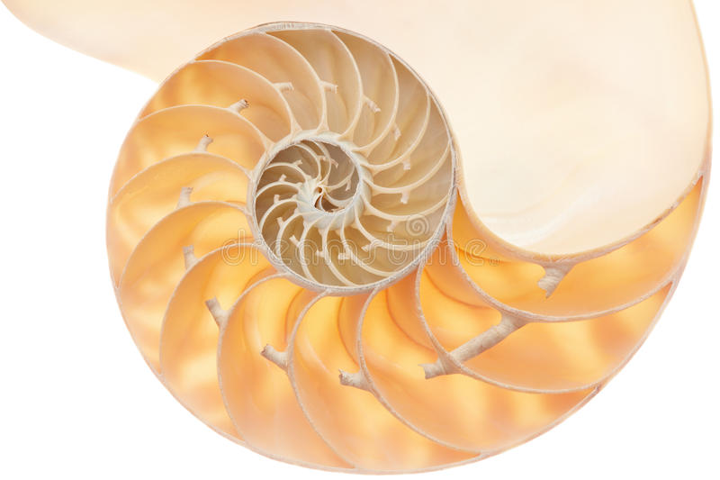 Nautilus shell section on white royalty free stock images