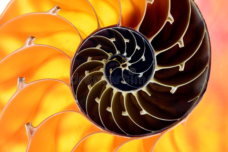 Nautilus Shell Section 1 Stock Images
