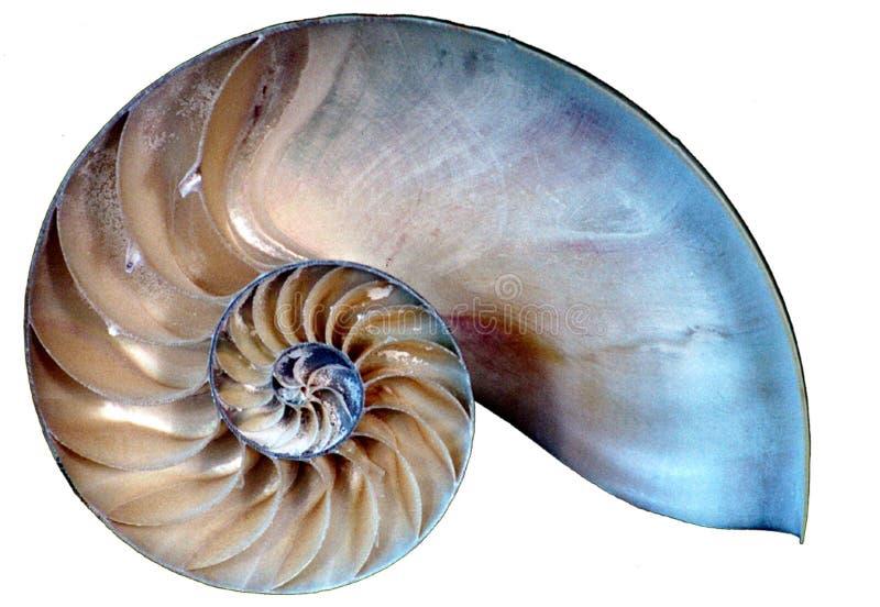 nautilus shell slice royalty free stock photo