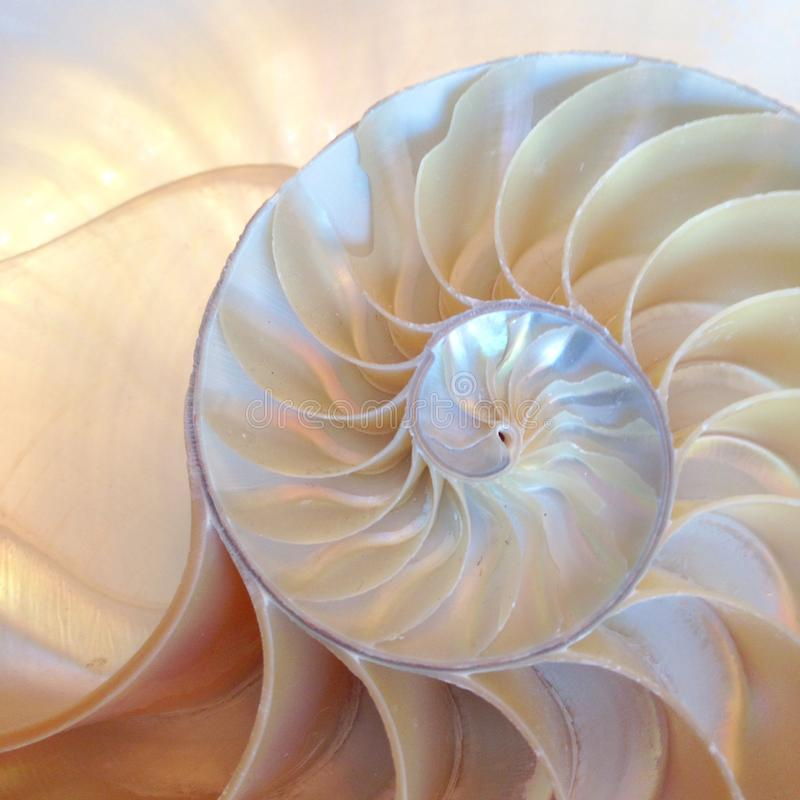 Nautilus shell symmetry Fibonacci half cross section spiral golden ratio structure growth close up back lit mother of pearl close royalty free stock photos