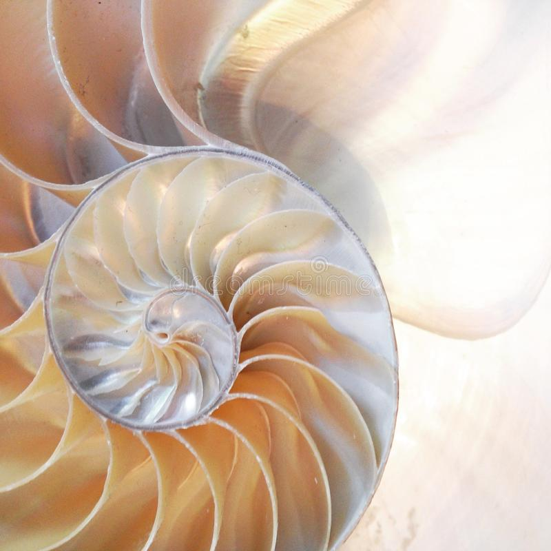 Nautilus shell symmetry Fibonacci half cross section spiral golden ratio mother of pearl stock, photo, photograph, image, picture. Nautilus shell symmetry royalty free stock photos