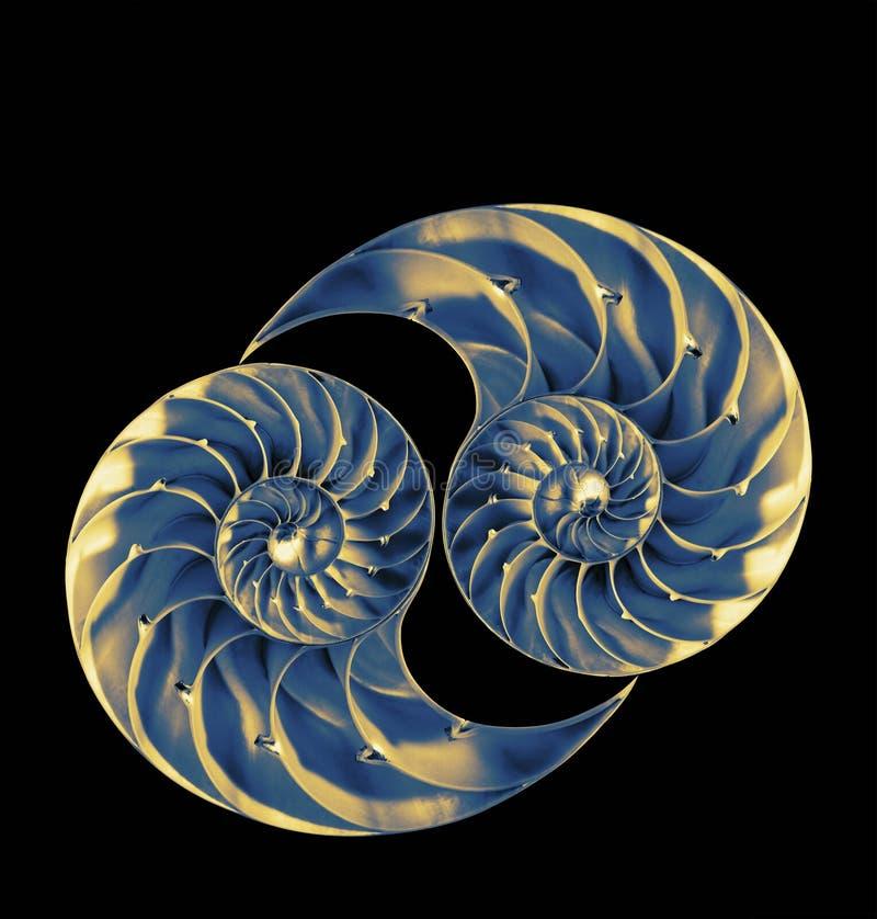 Free Nautilus Shells Royalty Free Stock Images - 36146849