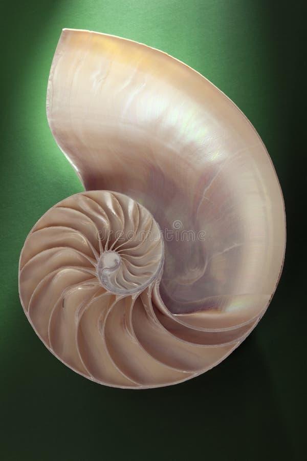 Nautilus spiral shell section stock photos
