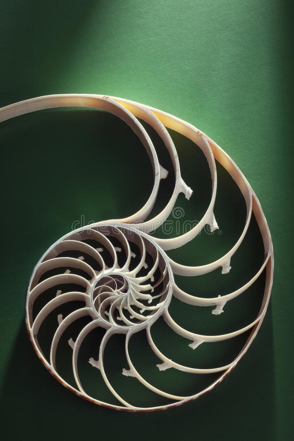 Nautilus spiral shell section royalty free stock photography