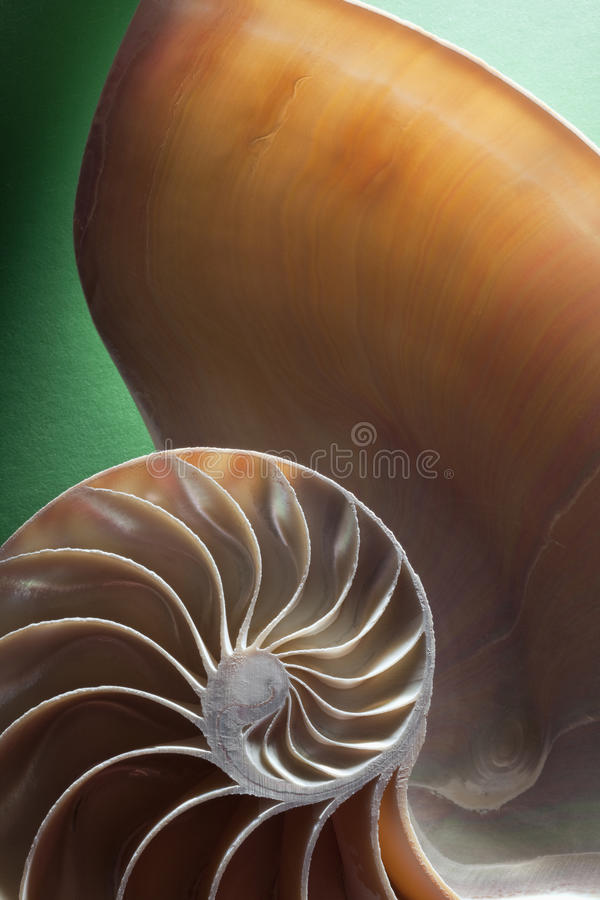 Nautilus spiral shell section royalty free stock photo