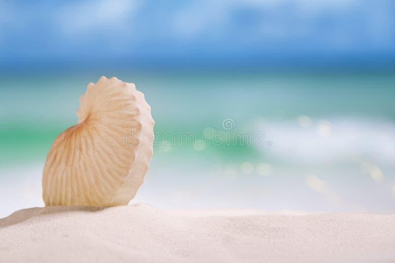 Nautilusdocument shell op wit zandig strand stock fotografie