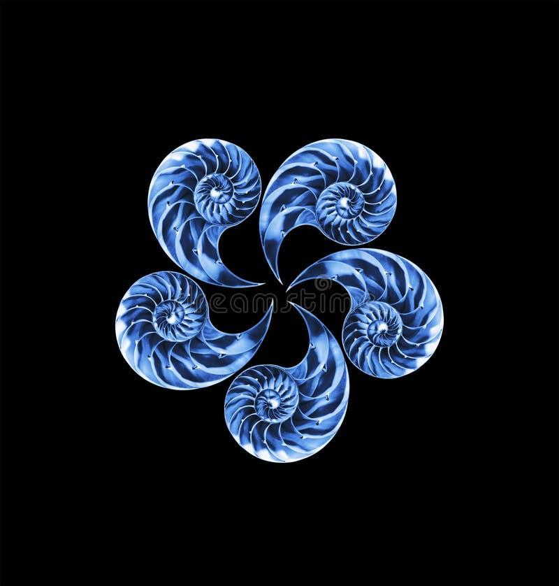 Nautilussheels som isoleras arkivfoton