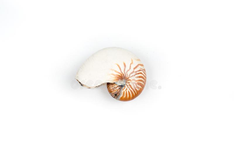 Nautilusshell op witte achtergrond wordt geïsoleerd die stock foto