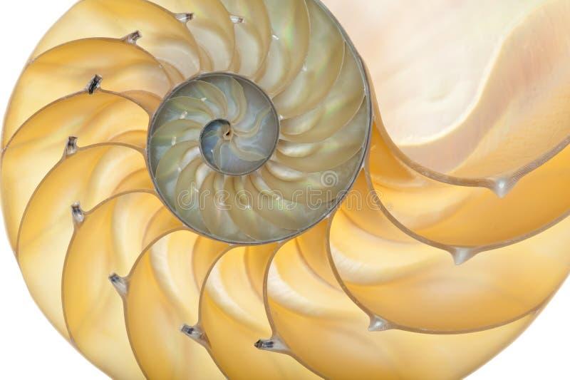 nautilusskal arkivbilder