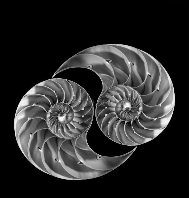 Nautilusskal royaltyfria foton